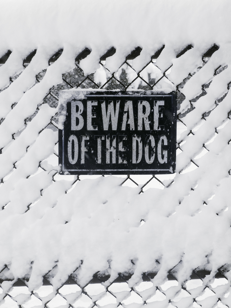 Warning sign on chain-link fence in snowstorm BEWARE OF THE DOG